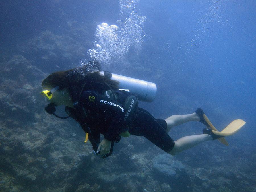 tauchen great barrier reef