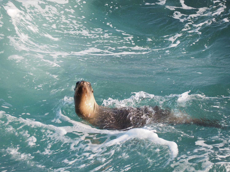 sandiego lajolla 3 1 - San Diego - mexikanischer Flair, Strände, Seelöwen und viel mehr