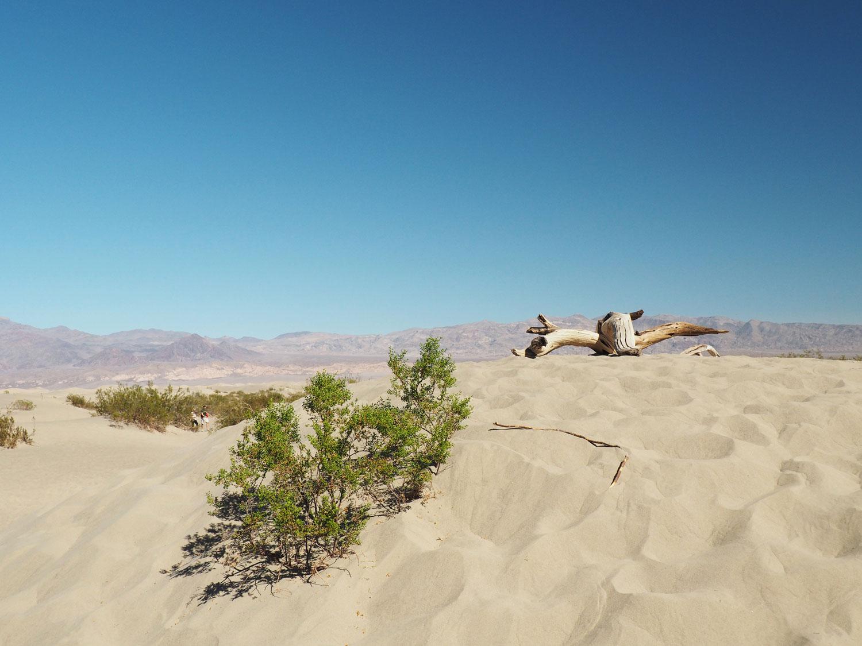 mesquite-sanddunes (1)
