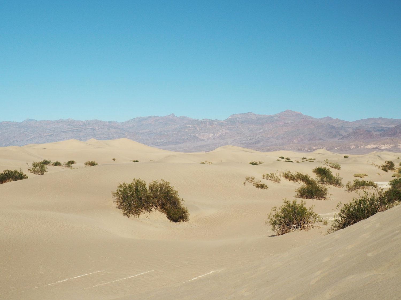 mesquite-sanddunes (2)