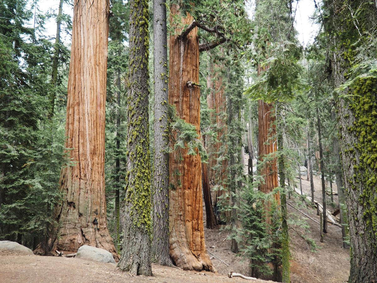 sequoia-nationalpark (13)