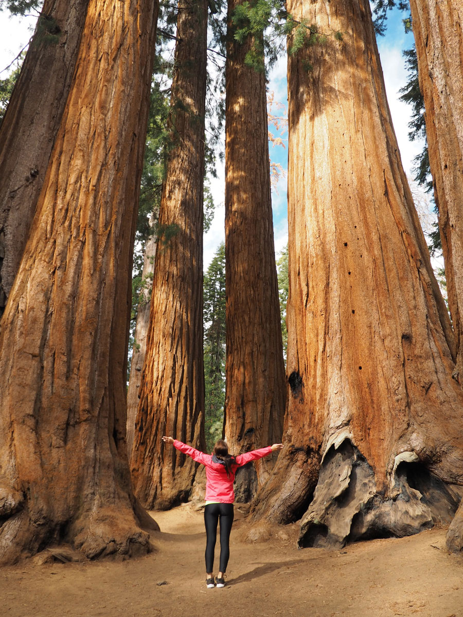 sequoia-nationalpark (6)