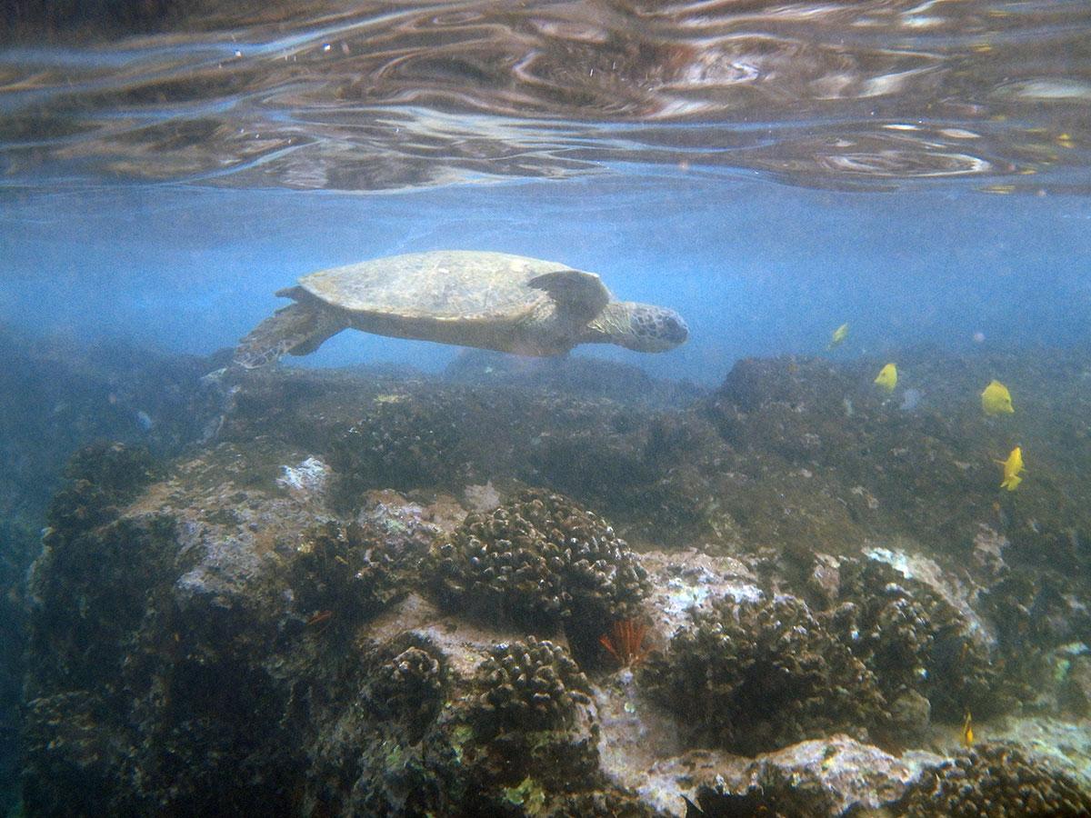 Schnorcheln-Hawaii (2)