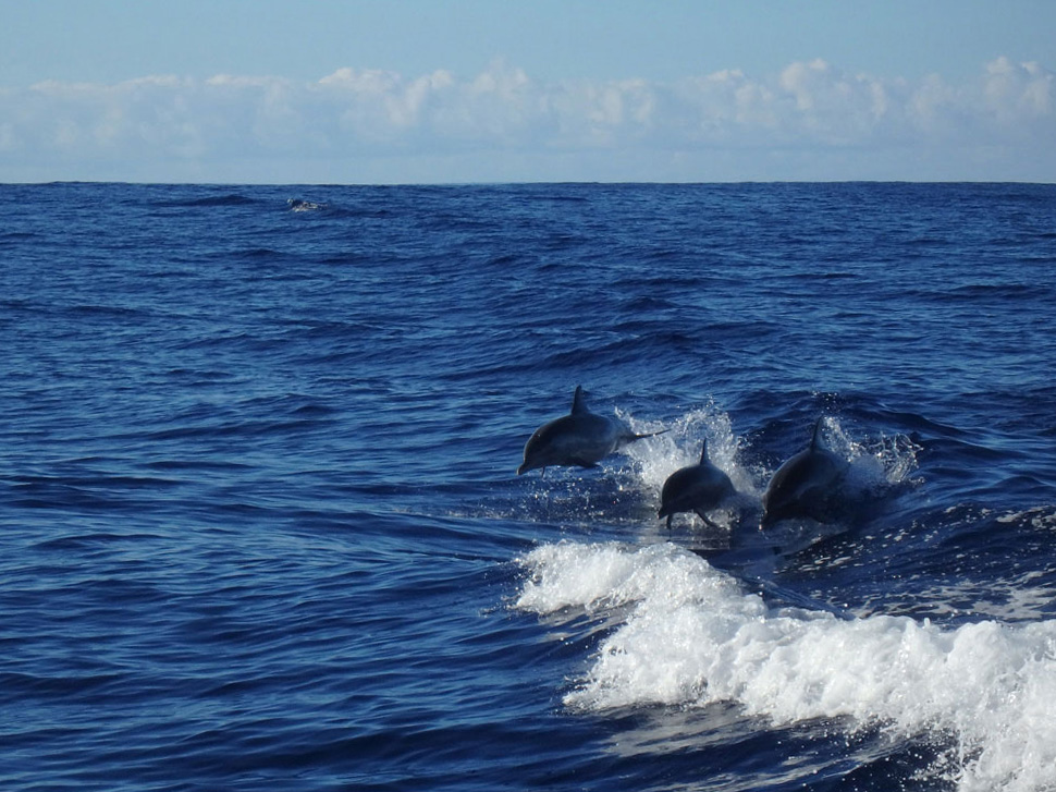 delfintour-hawaii