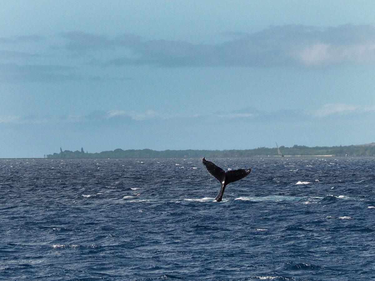 maui-whalewatching-(2)