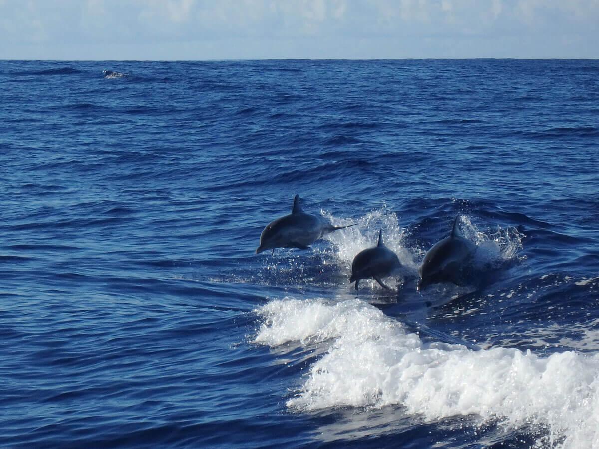 oahu-dolphin-whale-tour-(13)