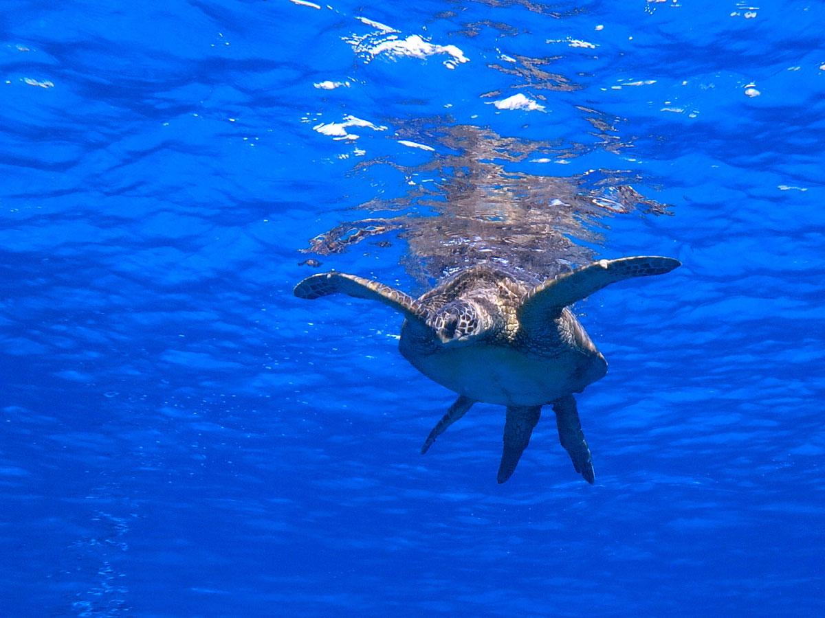 oahu-dolphin-whale-tour-(15)