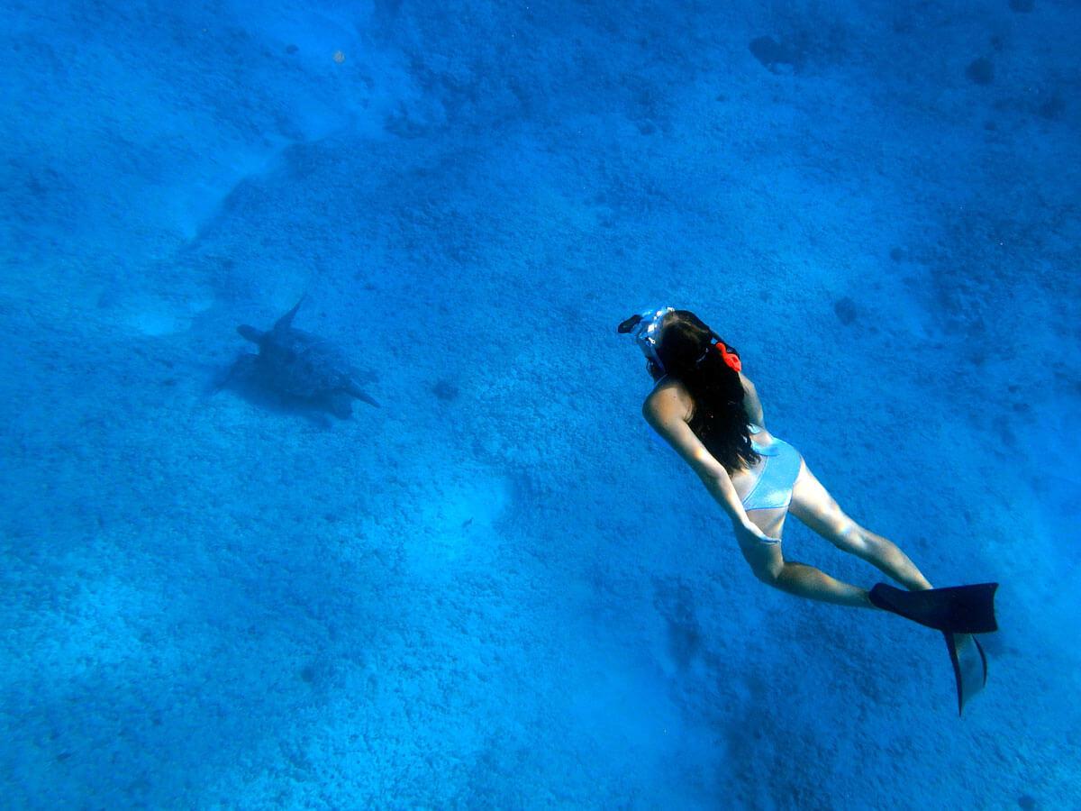 oahu-dolphin-whale-tour-(17)