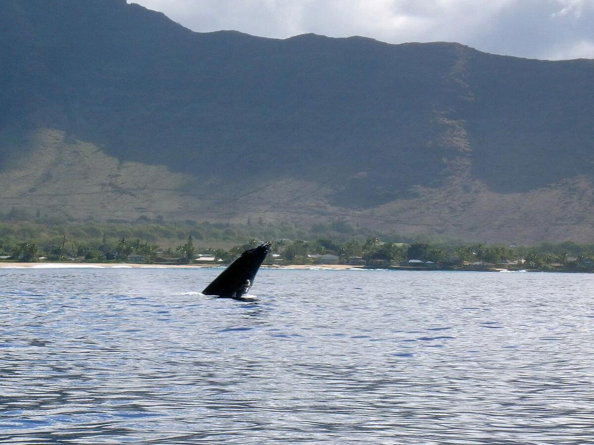 oahu-dolphin-whale-tour-(18)