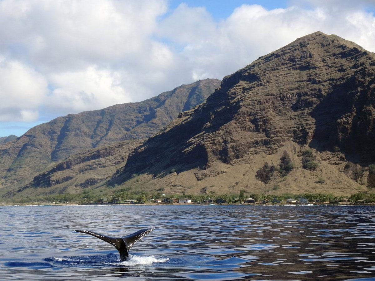 whalewatching-hawaii