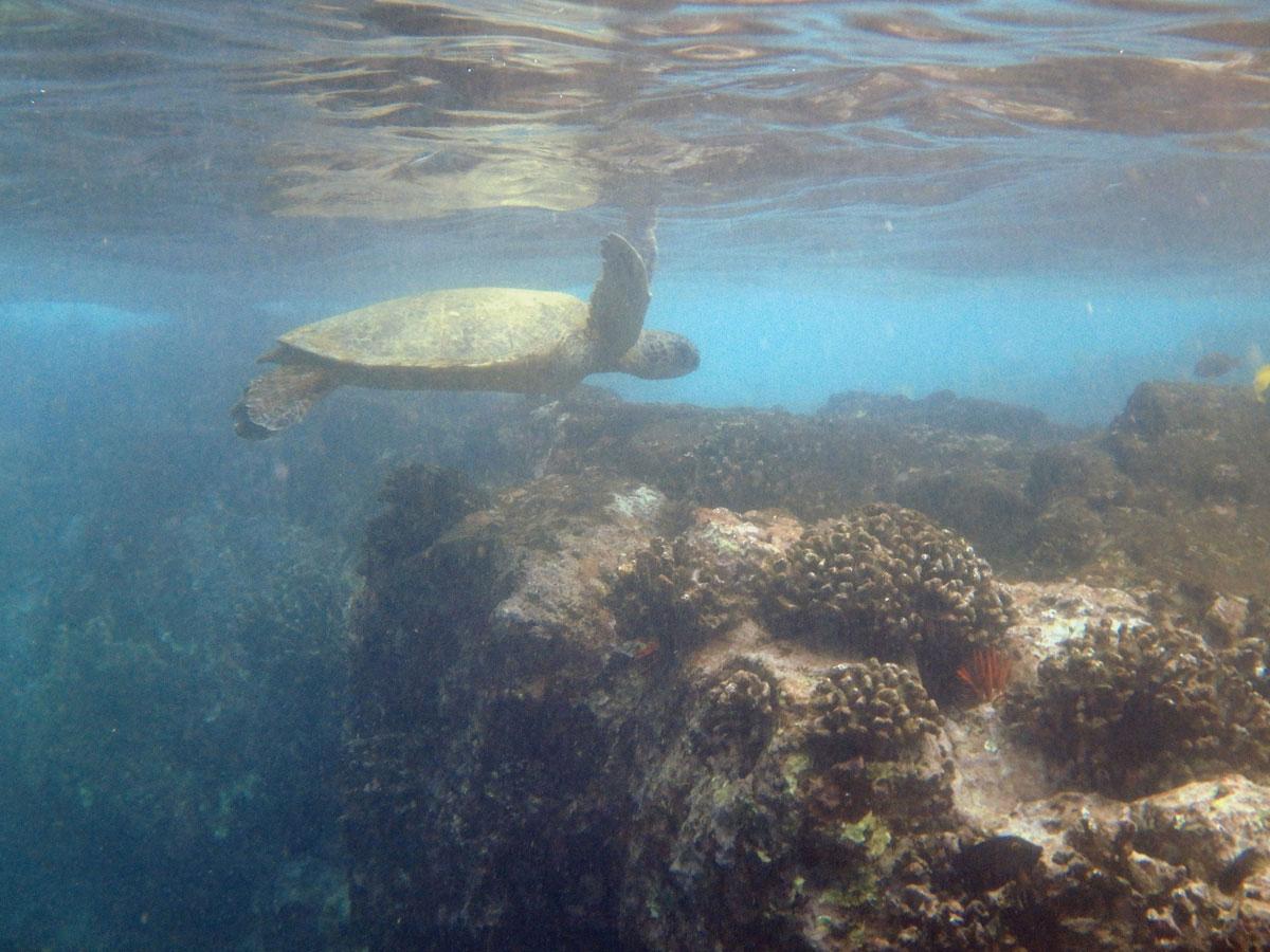 bigisland-hawaii-honaunau-bay-dolphin-(11)