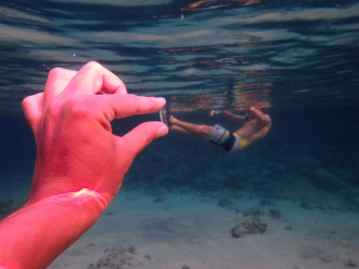 bigisland-hawaii-honaunau-bay-dolphin-(12)