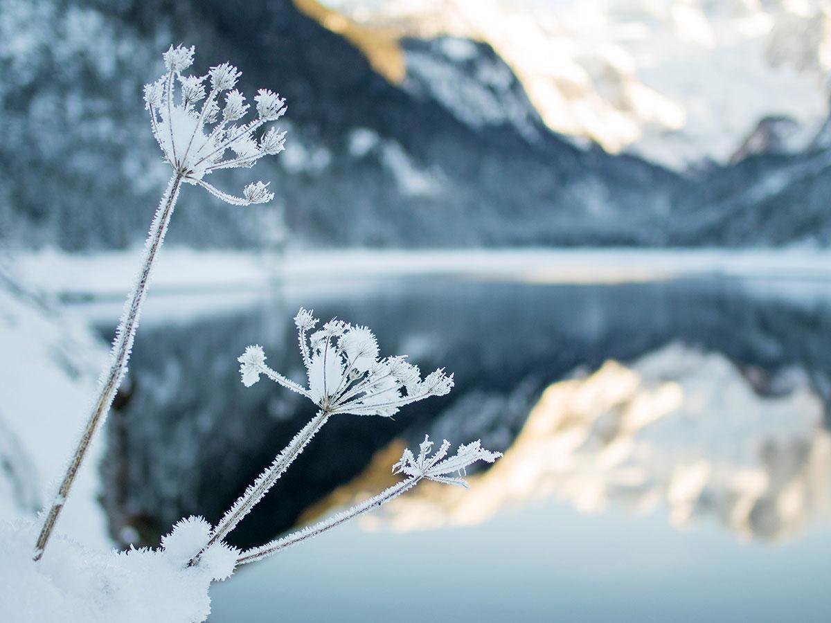 Gosausee Oberösterreich Winter Eis