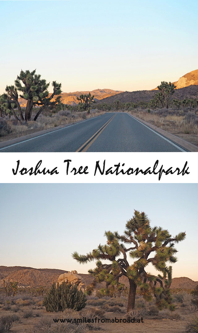 joshuatree3 - Joshua Tree Nationalpark - Felsformationen, Joshua Tree Bäume und wunderbare Natur