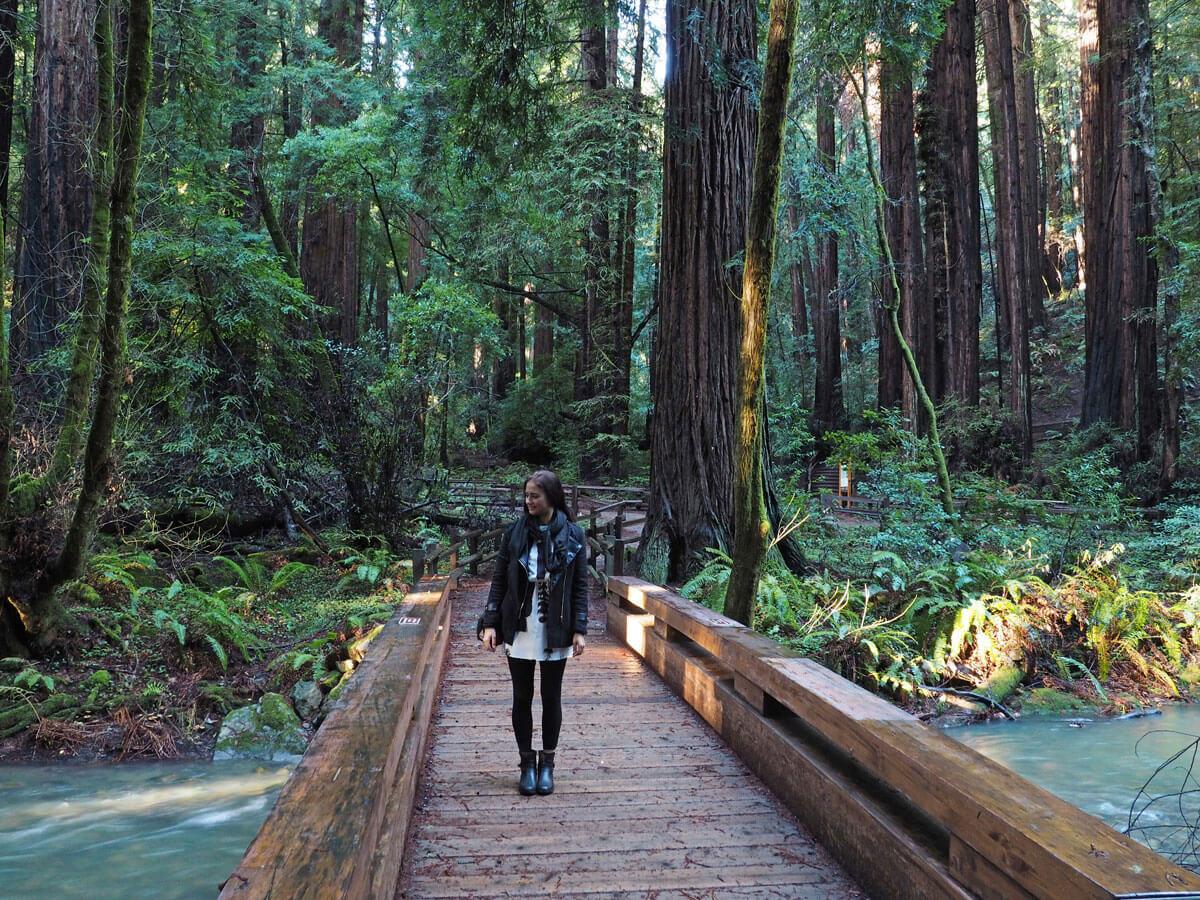 muir woods 4 - Mammutbäume im Muir Woods Park in der Nähe von San Francisco