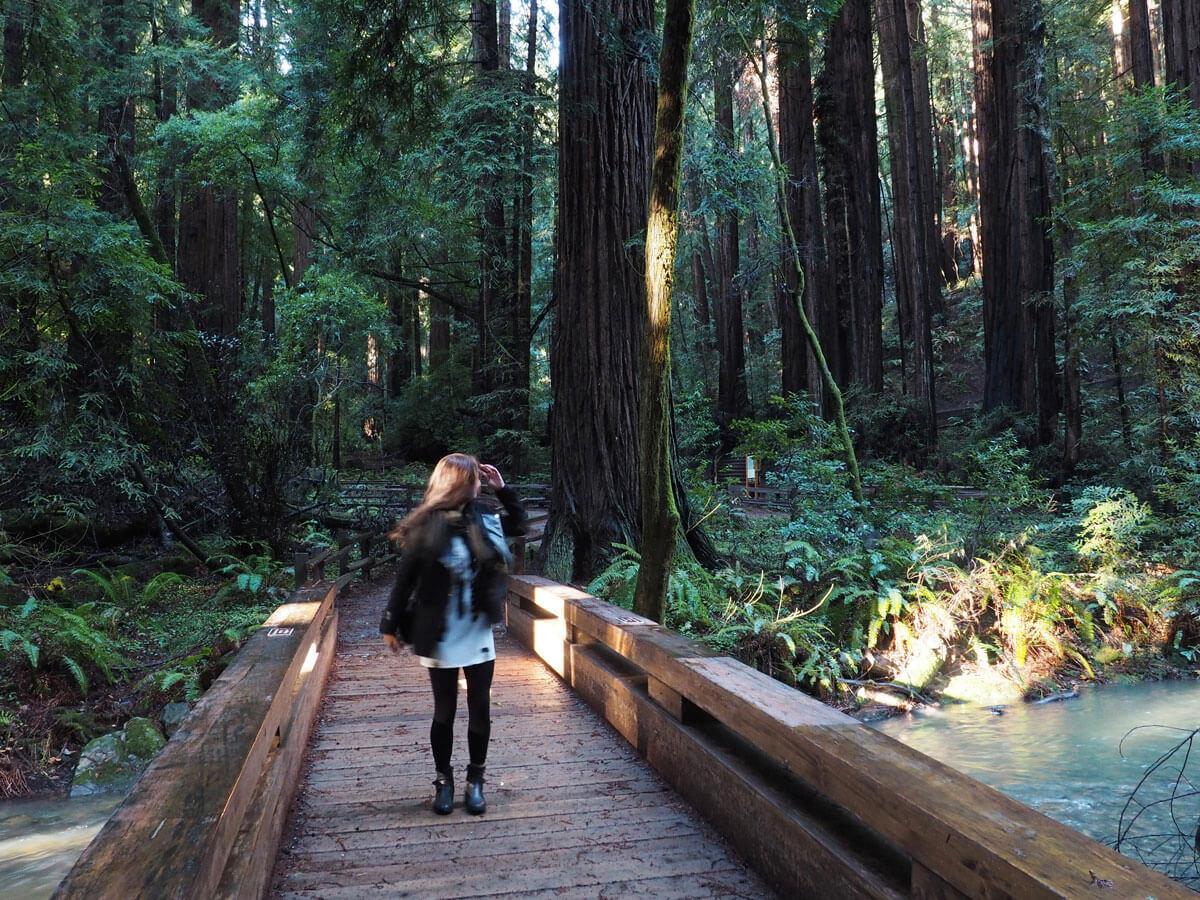 muir woods 5 - Mammutbäume im Muir Woods Park in der Nähe von San Francisco
