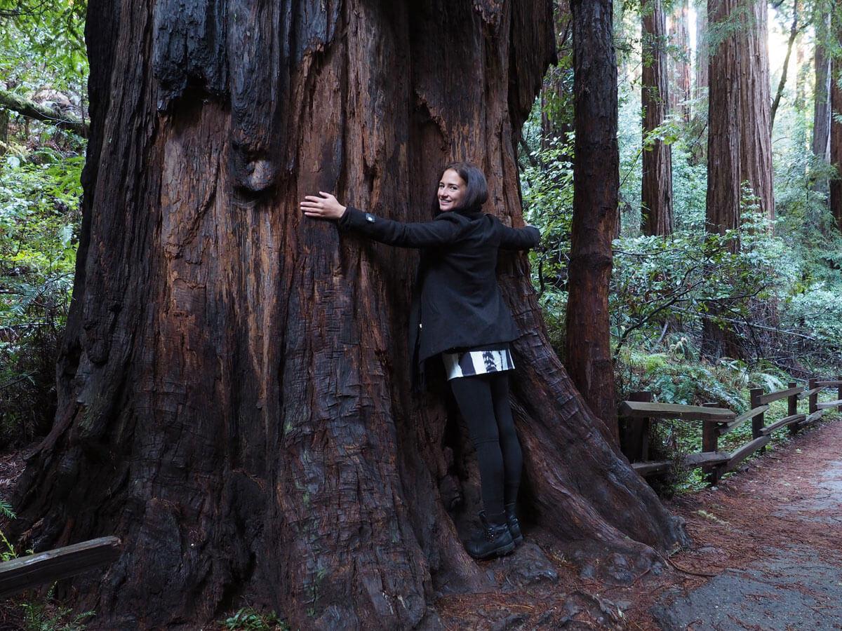 muir woods 9 - Mammutbäume im Muir Woods Park in der Nähe von San Francisco