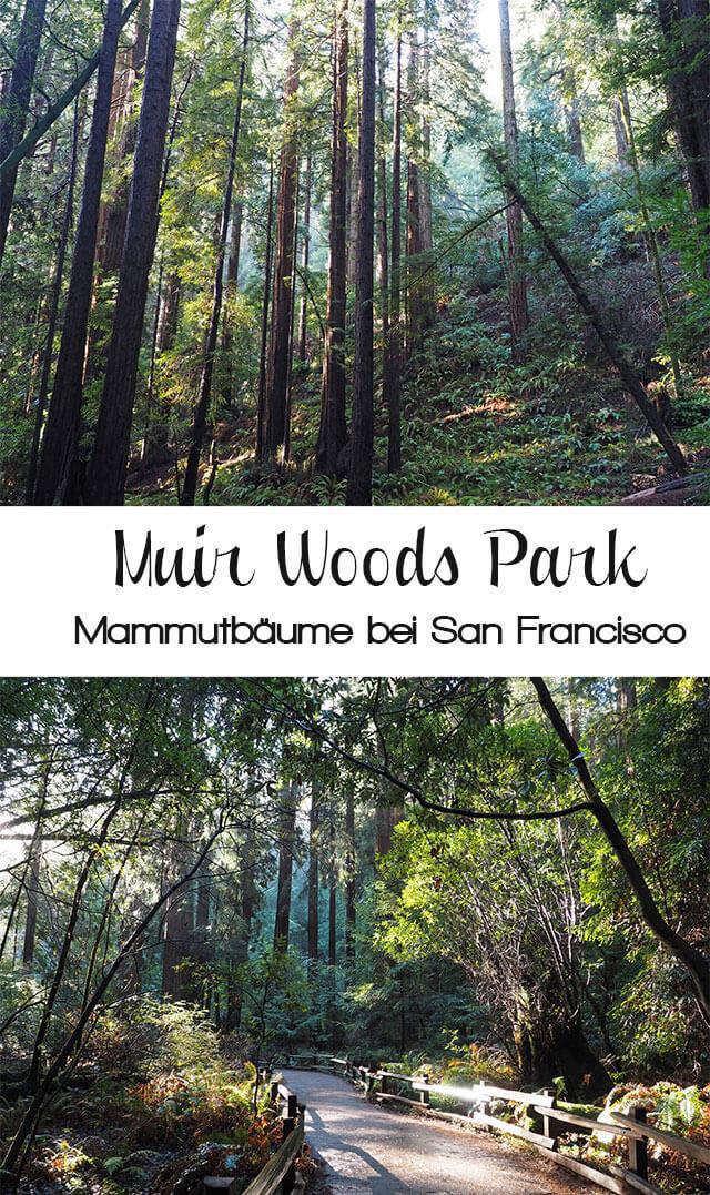 muirwoods2 - Mammutbäume im Muir Woods Park in der Nähe von San Francisco