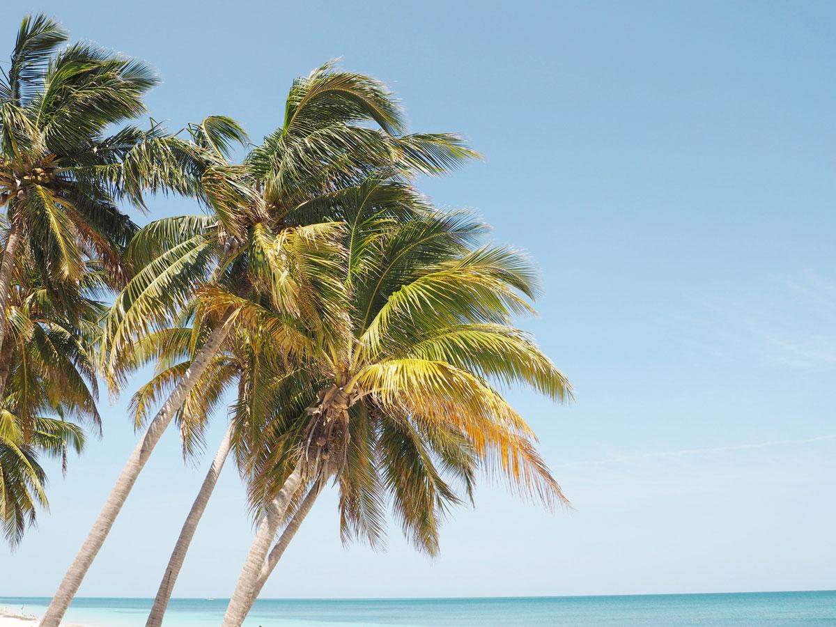 cayo levisa kuba 12 - Ausflug zum Traumstrand auf Cayo Levisa in Kuba