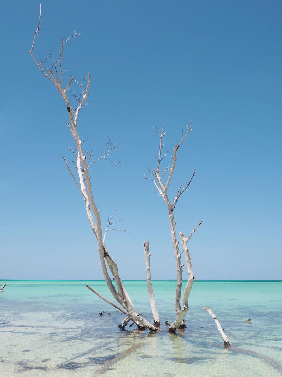 cayo levisa kuba 20 - Ausflug zum Traumstrand auf Cayo Levisa in Kuba