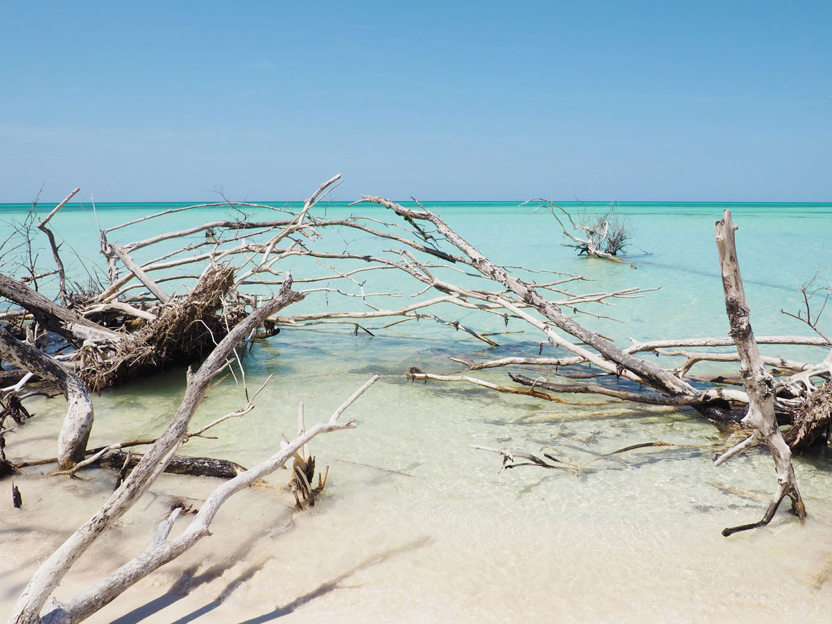 cayo levisa kuba 21 - Ausflug zum Traumstrand auf Cayo Levisa in Kuba