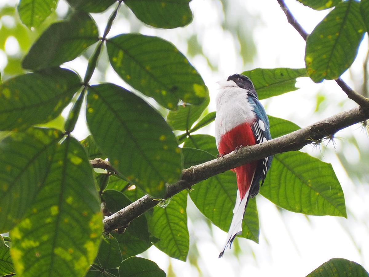 tocororo kuba - 6 Reisetipps für das Vinales Tal in Kuba