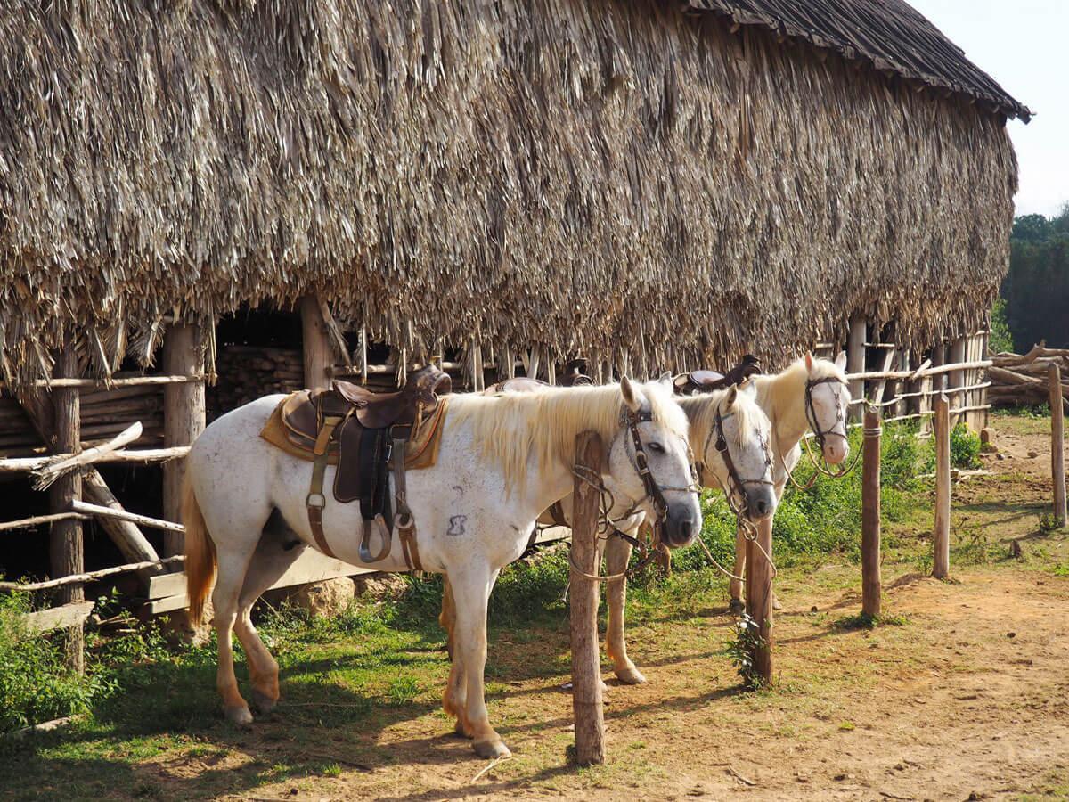 vinales tal kuba reise 39 - 6 Reisetipps für das Vinales Tal in Kuba