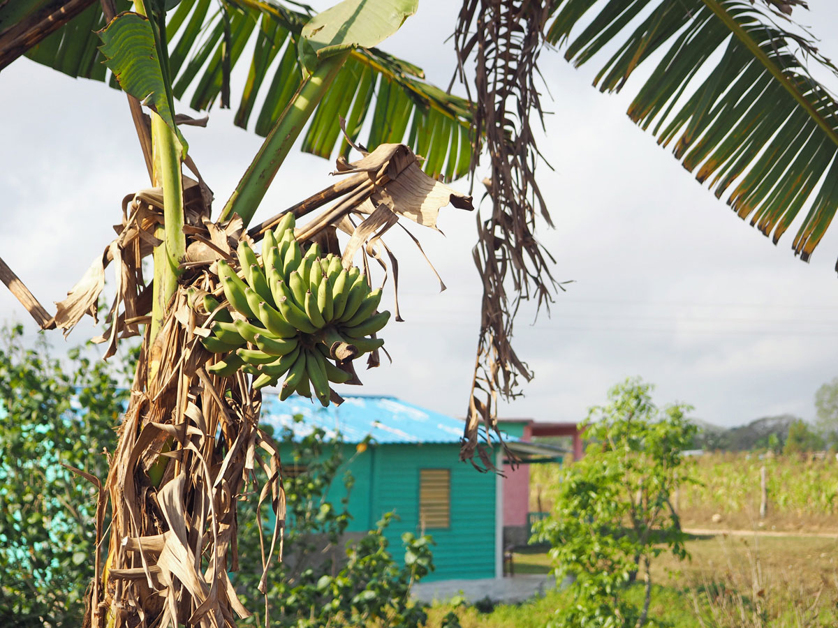 vinales tal kuba reise 41 - 6 Reisetipps für das Vinales Tal in Kuba
