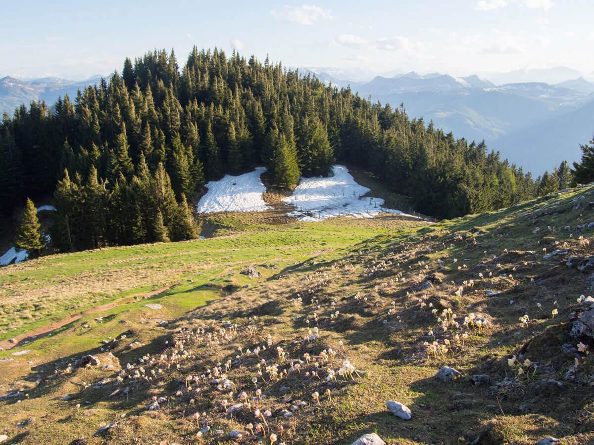 schafberg wandern 2 - Wandern auf den Schafberg beim Wolfgangsee