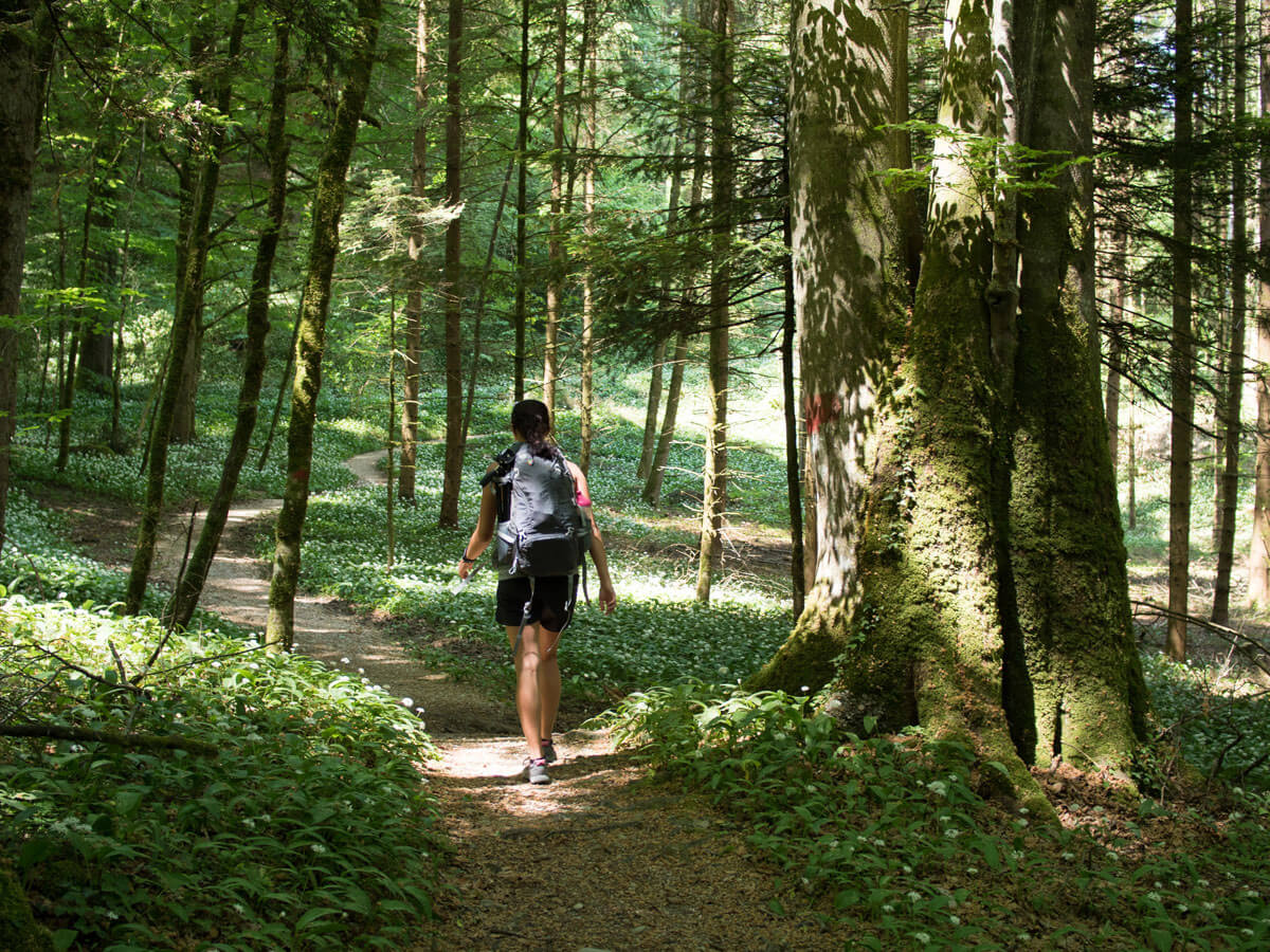 Wandern Attersee Salzkammergut