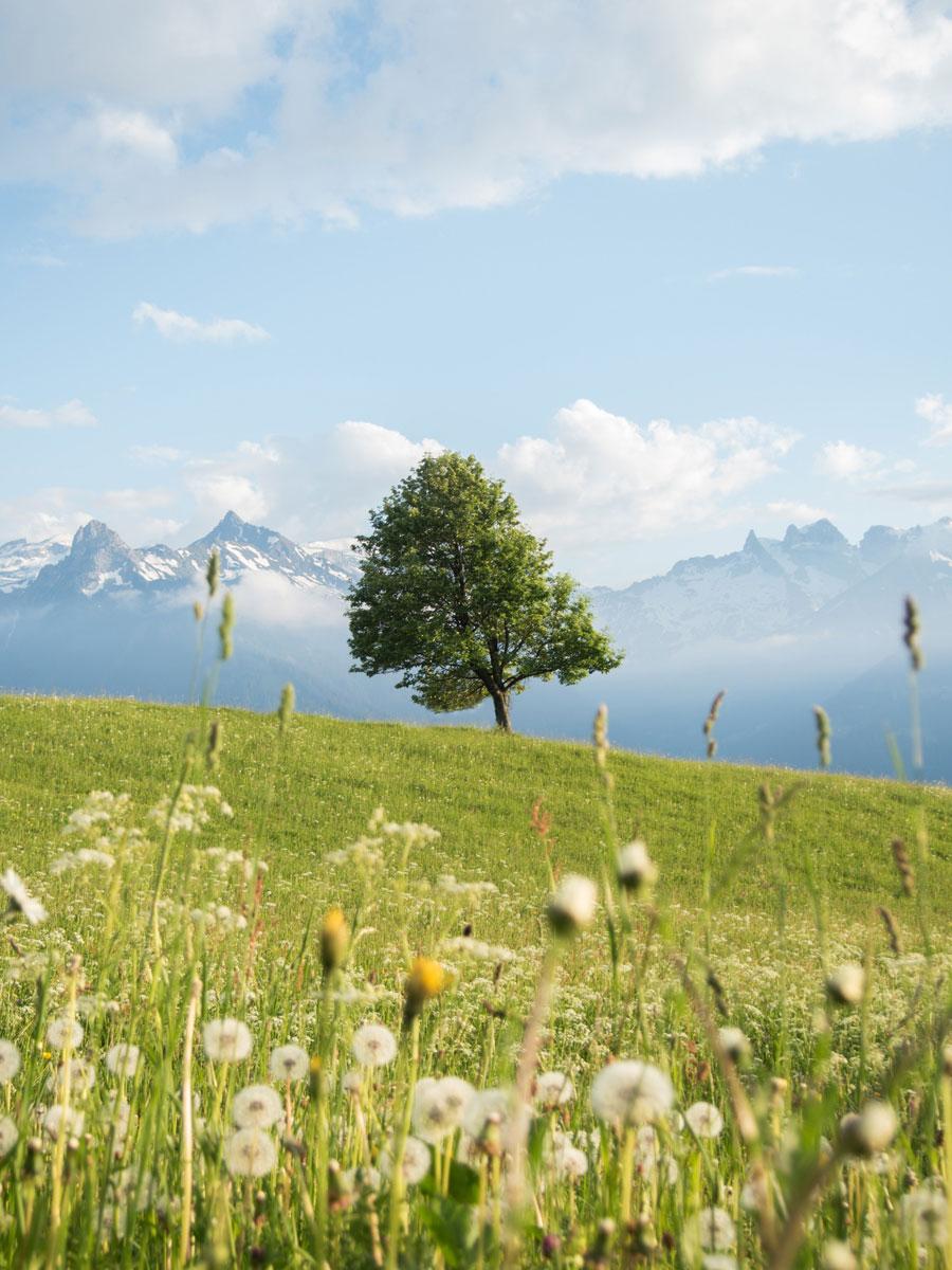 Fritzensee Montafon in Vorarlberg