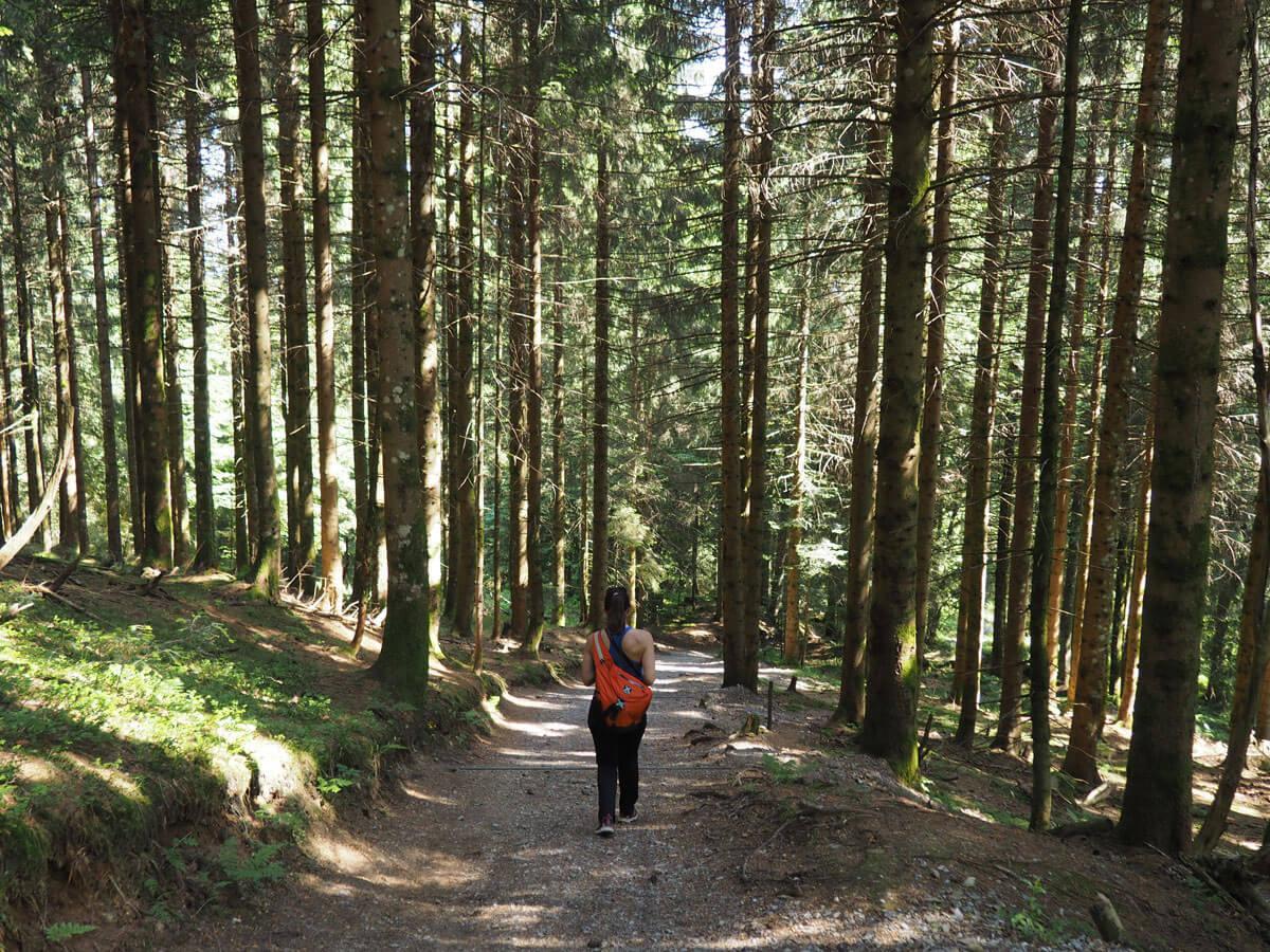 bregenzer wald kulinarisch wandern 2 - Die Top 5 Highlights im Bregenzerwald in Vorarlberg