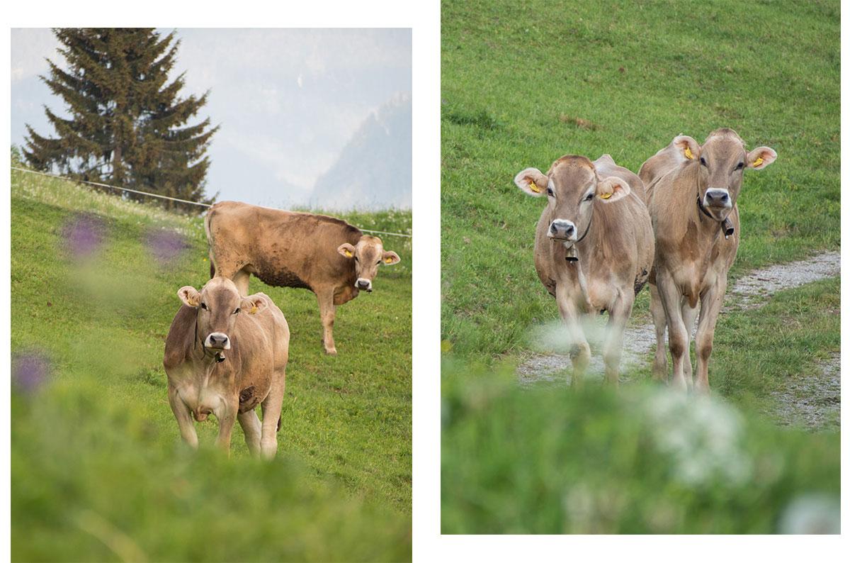 montafon vorarlberg kuehe 1 - Montafon in Vorarlberg entdecken - Von Bartholomäberg über den Fritzensee bis ins Silbertal