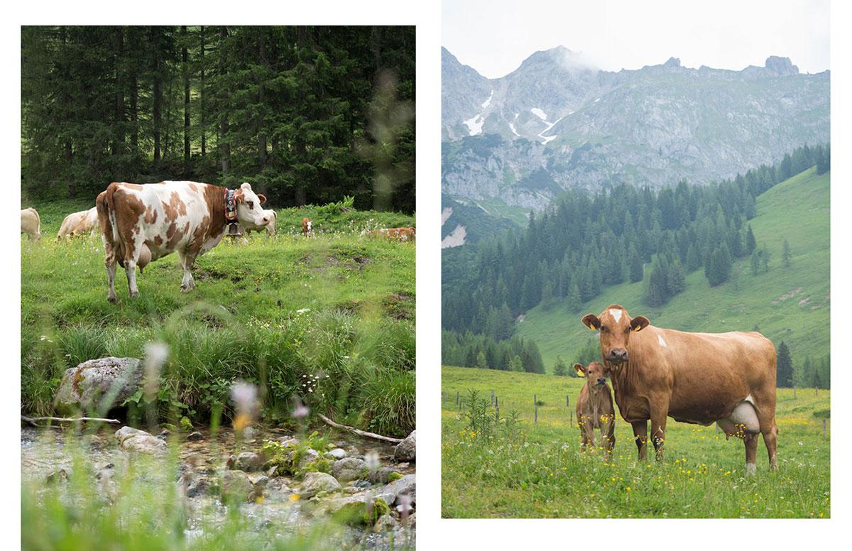 salzburger sportwelt bloghuette 3 - Highlights im Salzburgerland - Aktivitäten und Sehenswertes in der Salzburger Sportwelt