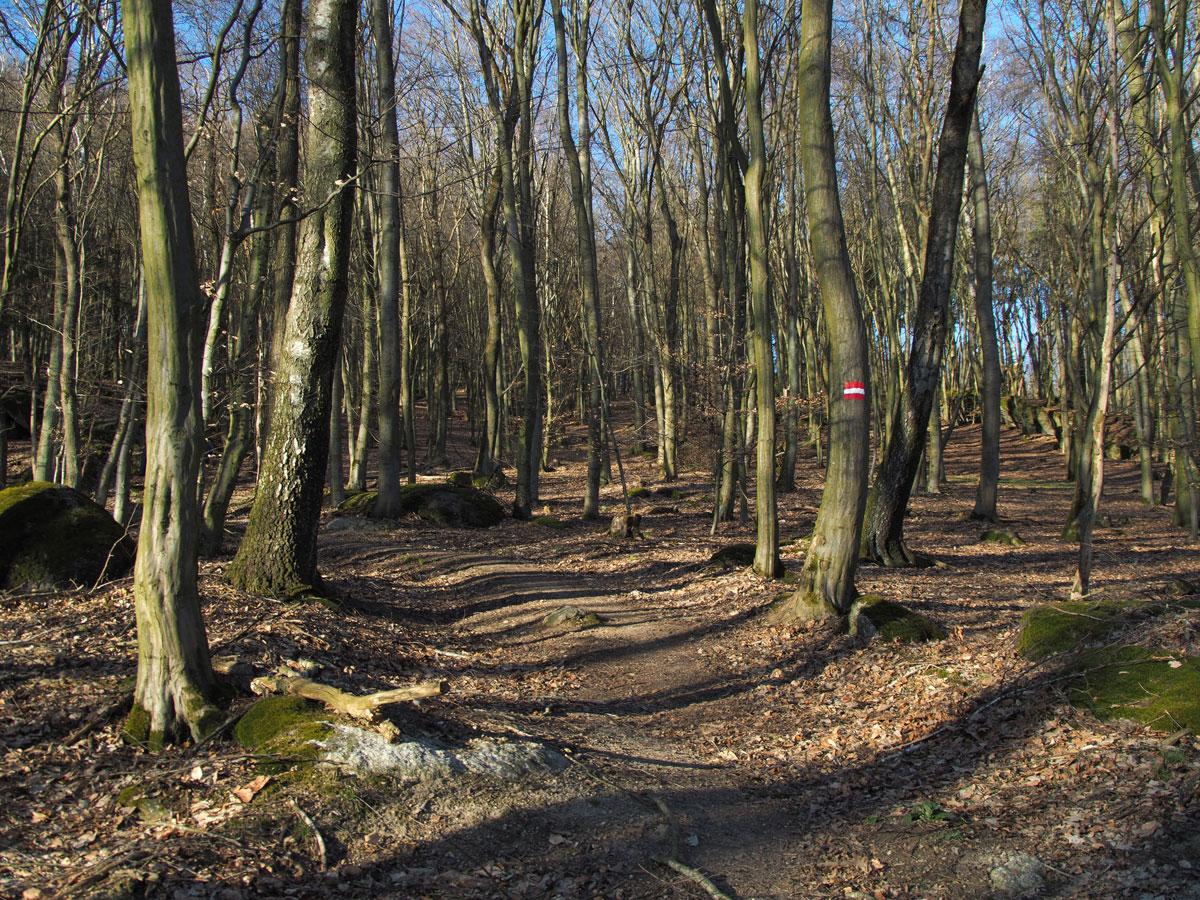Pfenningberg Linz Trailrunning
