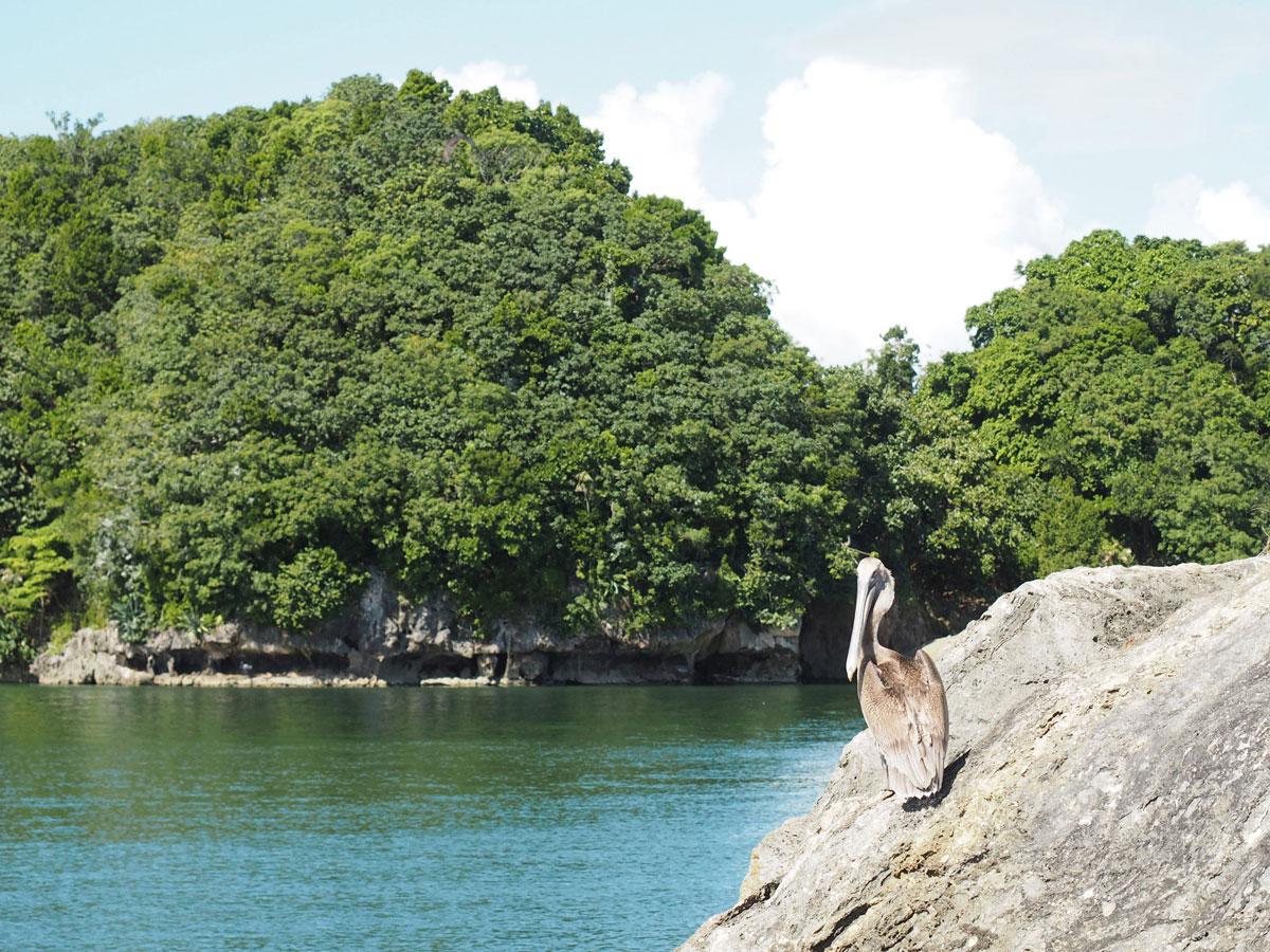 los haitises national park samana dominikanische republik 10 - Los Haitises National Park in Samana in der dominikanischen Republik