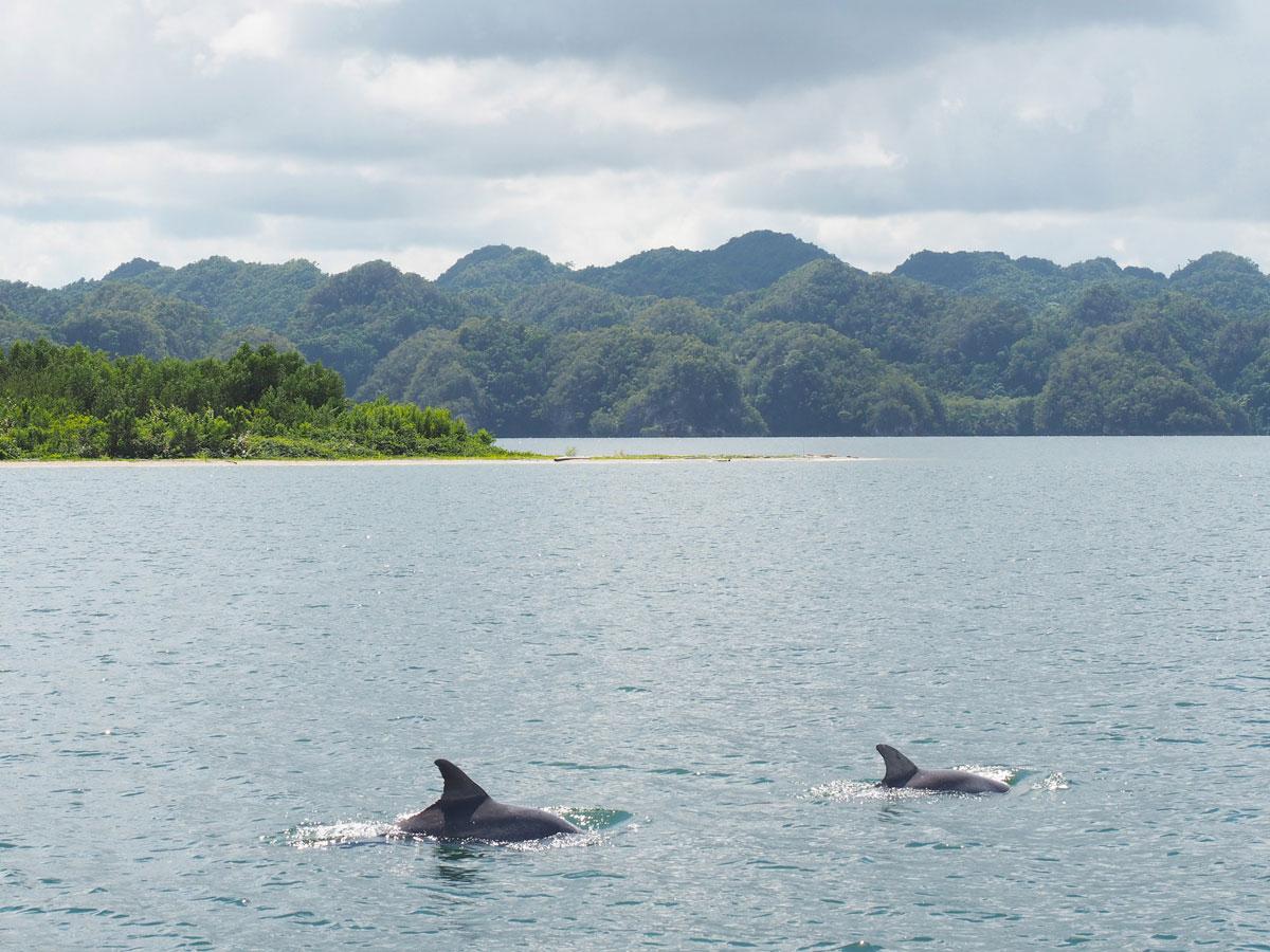 los haitises national park samana dominikanische republik 2 - Los Haitises National Park in Samana in der dominikanischen Republik