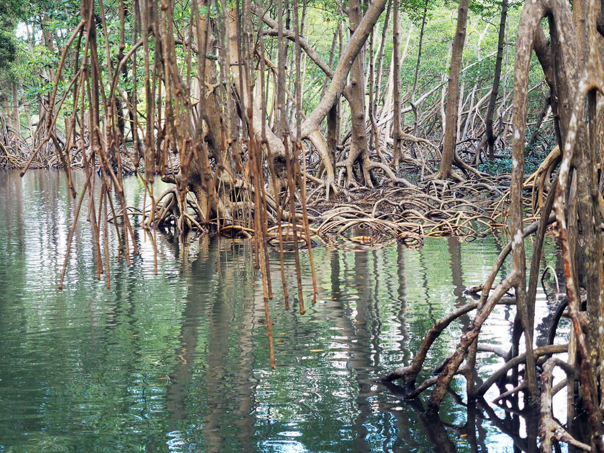los haitises national park samana dominikanische republik 5 - Los Haitises National Park in Samana in der dominikanischen Republik