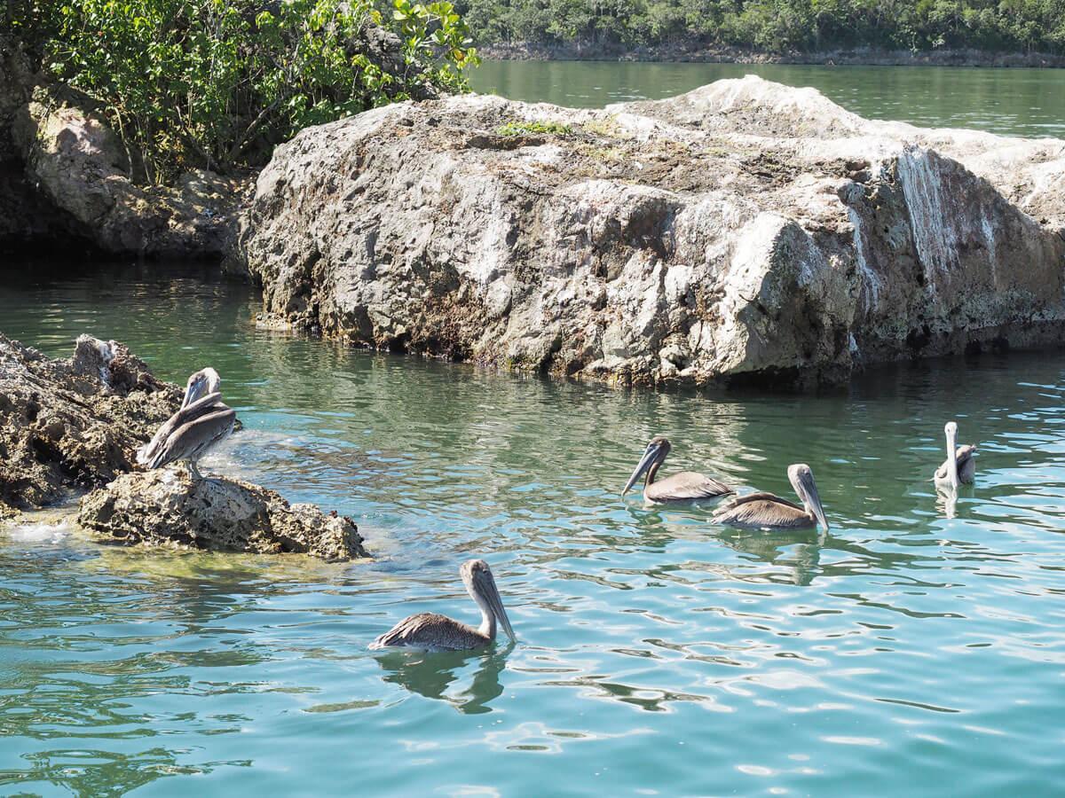 los haitises national park samana dominikanische republik 9 - Los Haitises National Park in Samana in der dominikanischen Republik