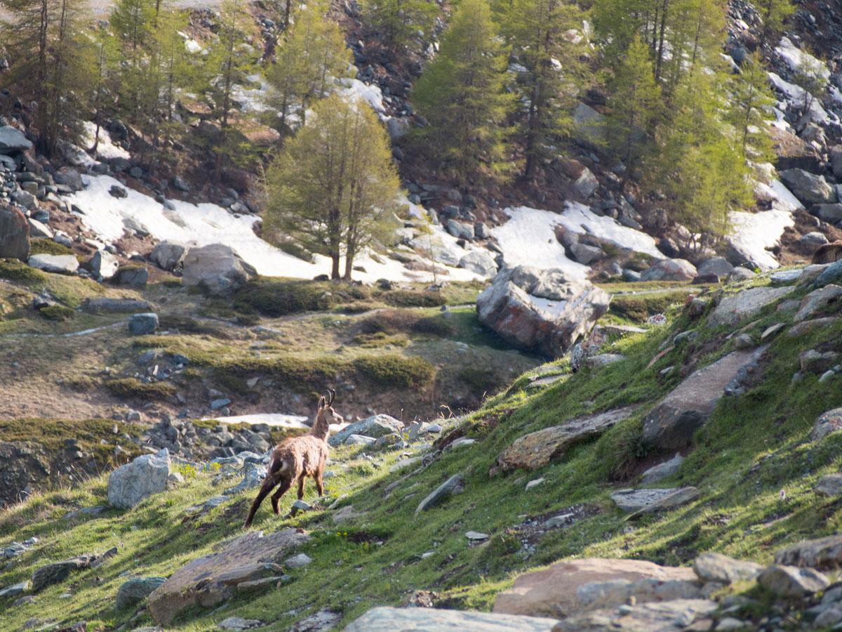 5seenwanderung zermatt schweiz 4 - 5 Seen Wanderung Zermatt - Stellisee, Grindjisee, Grünsee, Moosjiesee, Leisee