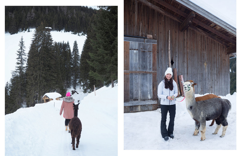 Alpakawandern in Salzburg im Winter