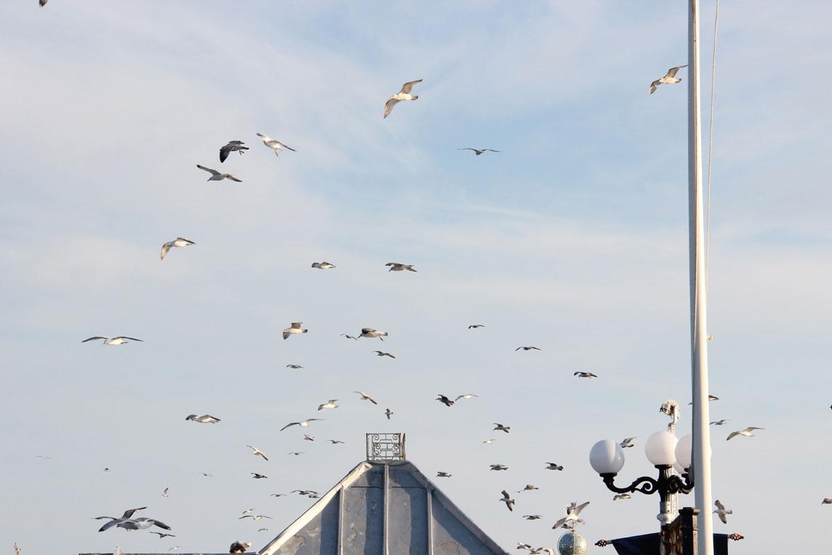 brighton england tagesausflug london 2 - Die 5 schönsten Tagesausflüge von London