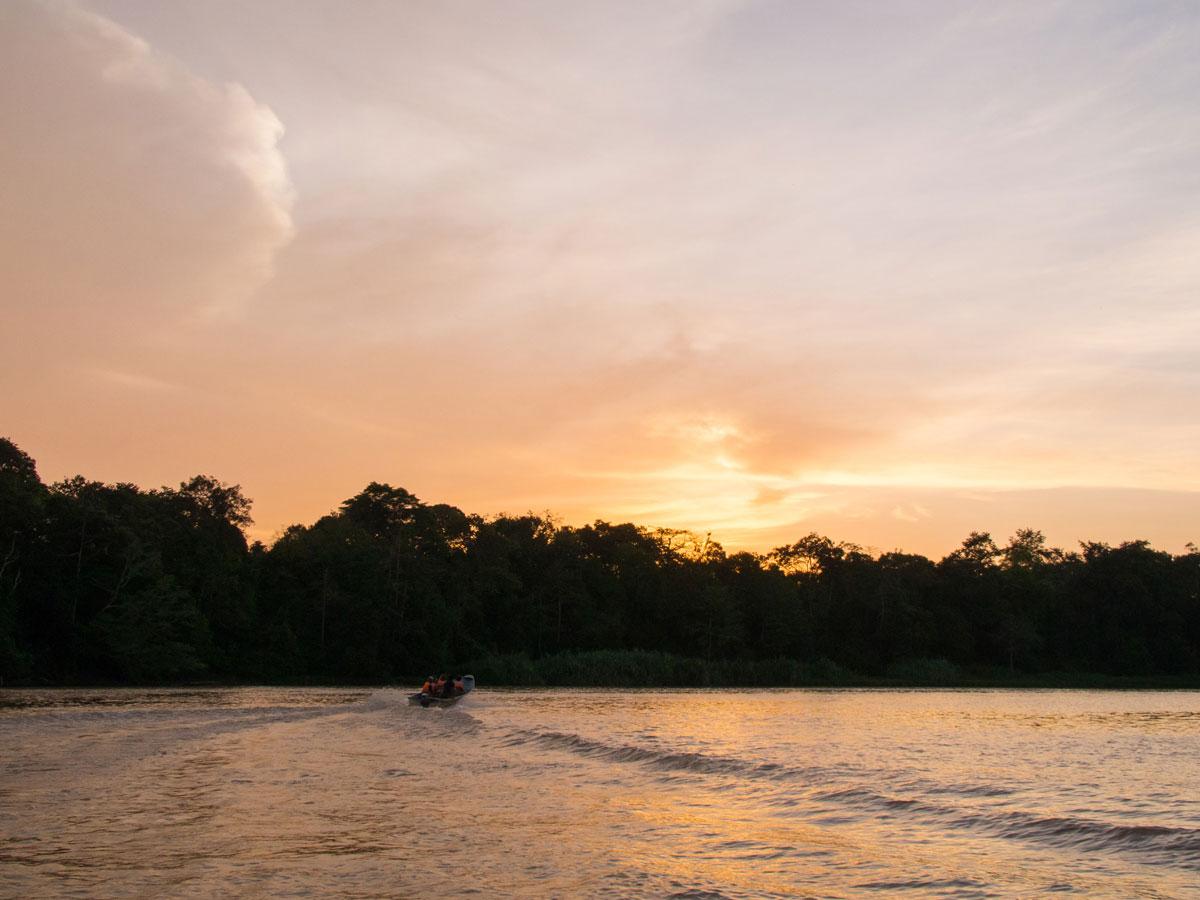 borneo kinabatangan river cruise erfahrungsbericht 13 - Warum ich keine Kinabatangan River Cruise mehr machen würde - Mein Erfahrungsbericht