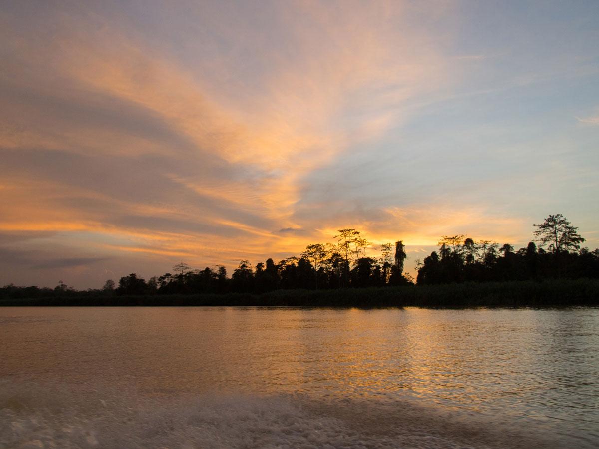 borneo kinabatangan river cruise erfahrungsbericht 14 - Warum ich keine Kinabatangan River Cruise mehr machen würde - Mein Erfahrungsbericht