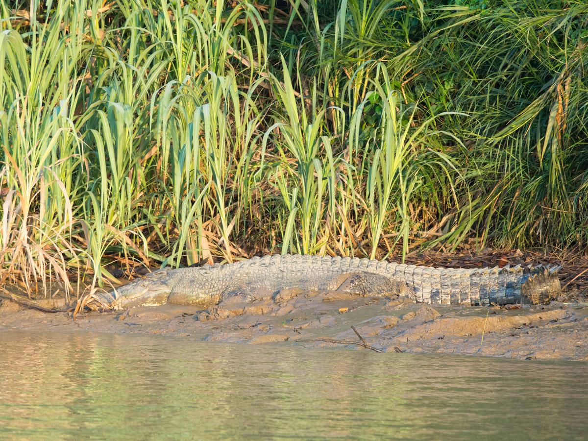 borneo kinabatangan river cruise erfahrungsbericht 15 - Warum ich keine Kinabatangan River Cruise mehr machen würde - Mein Erfahrungsbericht