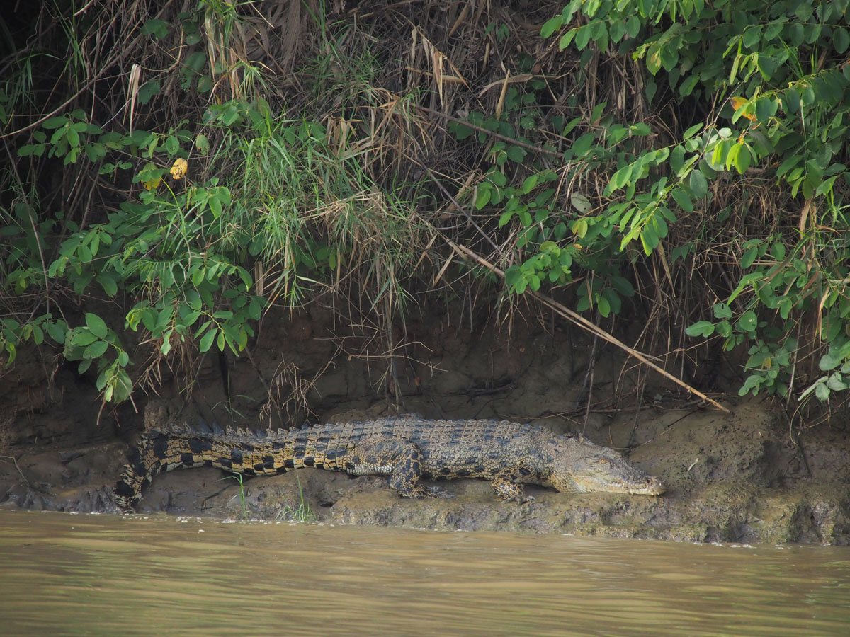 borneo kinabatangan river cruise erfahrungsbericht 21 - Warum ich keine Kinabatangan River Cruise mehr machen würde - Mein Erfahrungsbericht