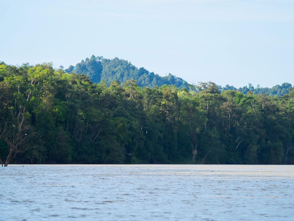 borneo kinabatangan river cruise erfahrungsbericht 4 - Warum ich keine Kinabatangan River Cruise mehr machen würde - Mein Erfahrungsbericht