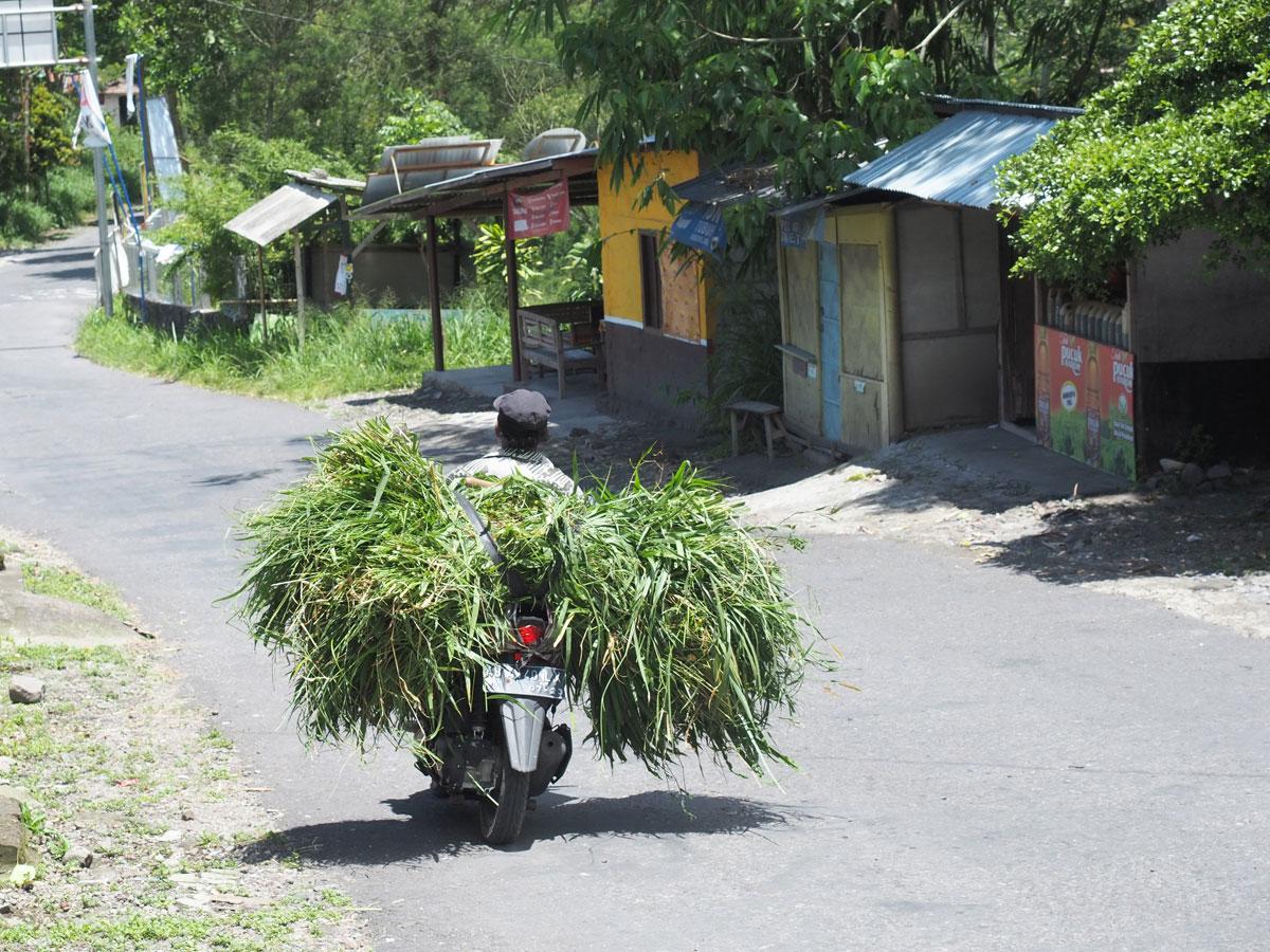 Transport auf der Insel Java in Indonesien