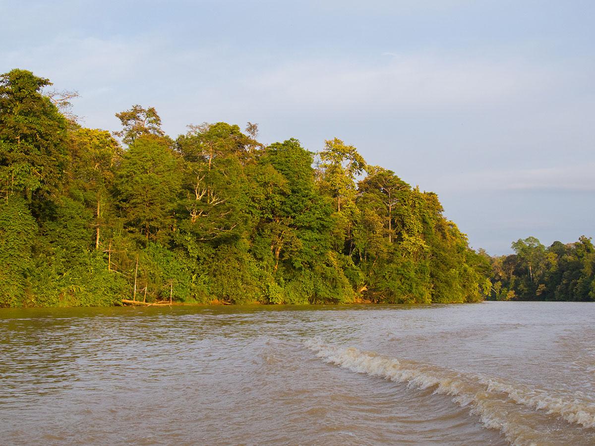 borneo kinabatangan river cruise - Warum ich keine Kinabatangan River Cruise mehr machen würde - Mein Erfahrungsbericht