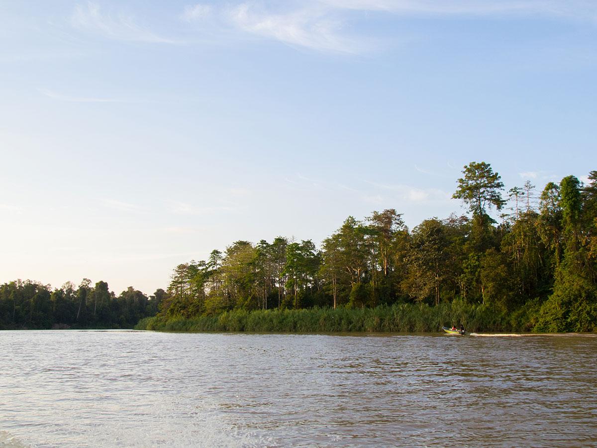 borneo kinabatangan river - Warum ich keine Kinabatangan River Cruise mehr machen würde - Mein Erfahrungsbericht